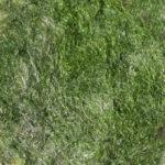 Nuance Vert poudre